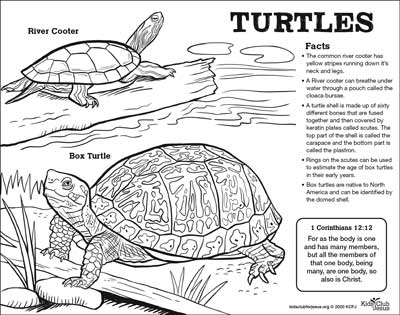 Turtle fact Sheet for kids