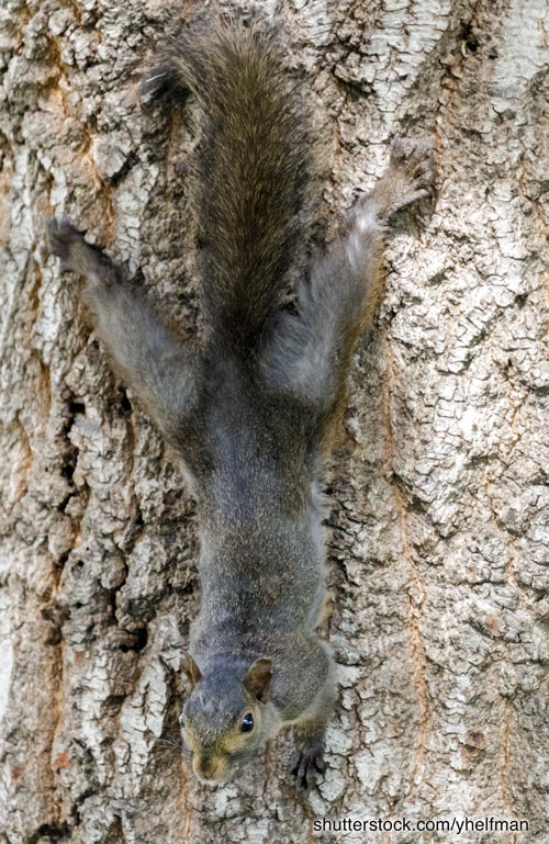 Squirrel hanging in tree