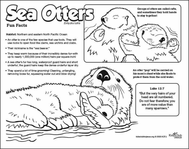 Sea Otter coloring fact Sheet for kids